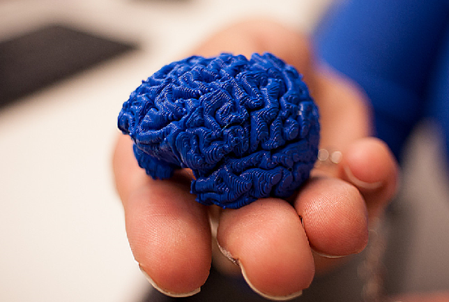 Students in the Brain3M program each receive their own 3D printed model of the human brain so they can closely examine it themselves.